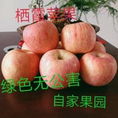 【峻农果品】烟台栖霞红富士苹果80mm优惠果9个5斤包售后包邮惊爆价