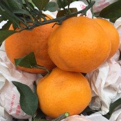 【新鲜水果】四川 浦江耙耙柑 8斤中果 约24粒以内 热卖网红水果