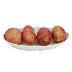 云南高山红皮小土豆5/10斤装