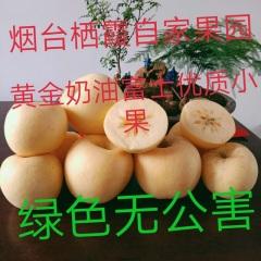 【峻农果品】烟台栖霞奶油富士苹果70mm----75mm15个净重5斤包邮包售后