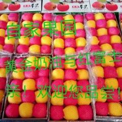 【峻农果品】栖霞红富士与黄金奶油富士苹果搭配10斤装包邮包售后