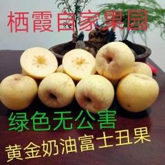 【峻农果品】烟台栖霞黄金奶油富士75mm丑果15个6斤装包邮包售后
