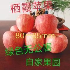 【峻农果品】烟台栖霞红富士苹果80—85mm优质果12个6斤装包邮包售后