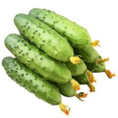 【新鲜果蔬】旱黄瓜 5斤(20根左右)